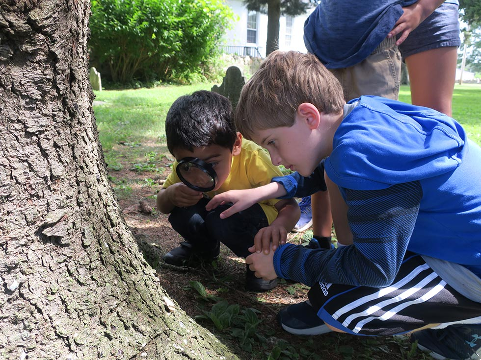 Children Looking At Something On A Tree With A Magnifying Glass